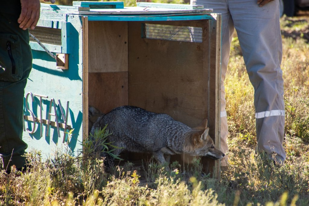 Liberaron a 17 animales del Parque Yastay