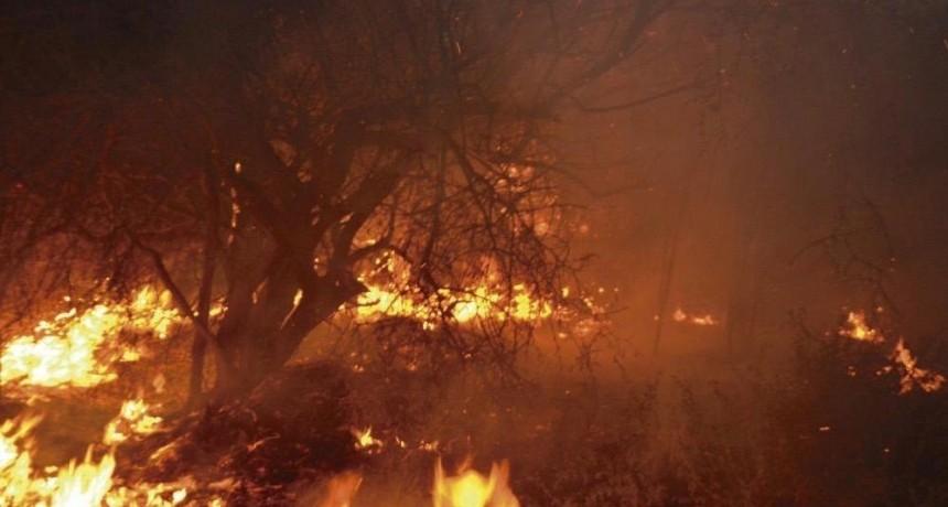 Un incendio forestal conmocionó a los vecinos de Villa Unión